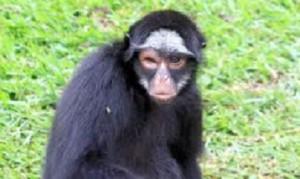 zoo_sorocaba3-1
